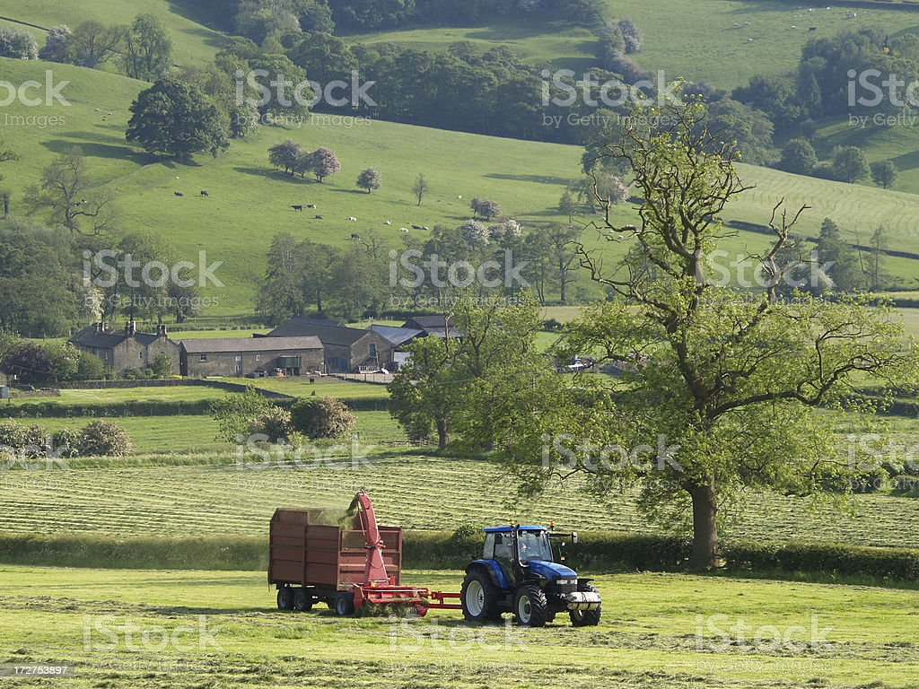 Grass Cutting with  big tree royalty-free stock photo