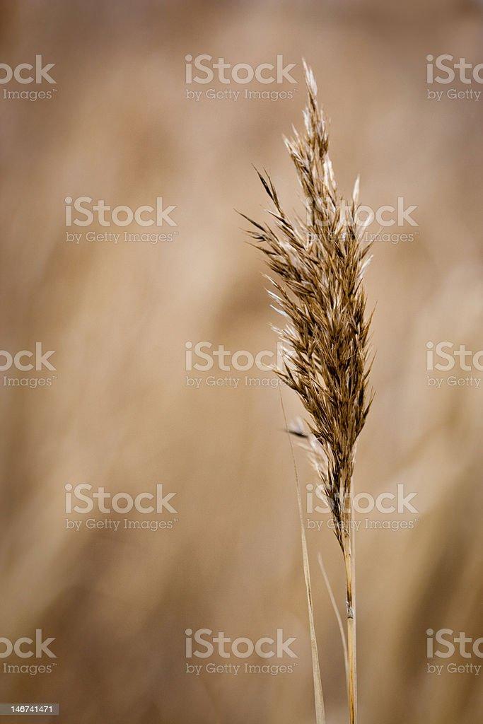 grass detail stock photo