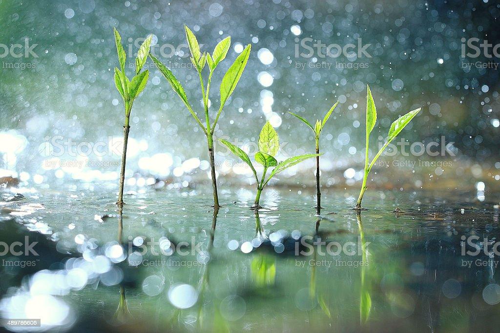 grass dew rain macro fresh green eco stock photo