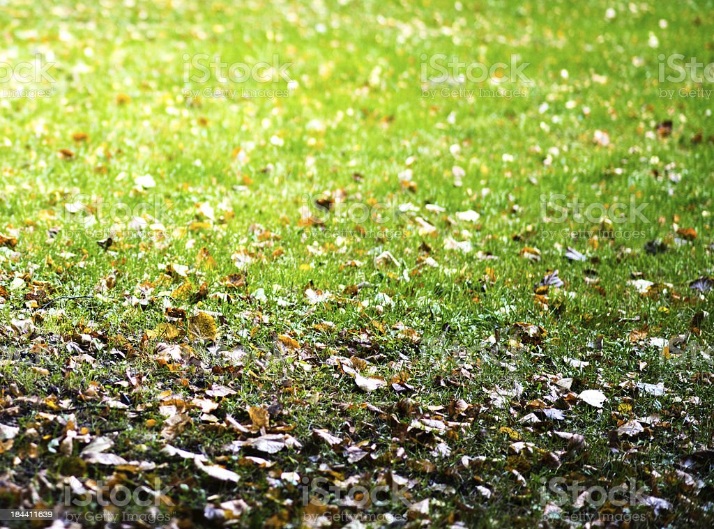 grass dotted with leaves royalty-free stock photo