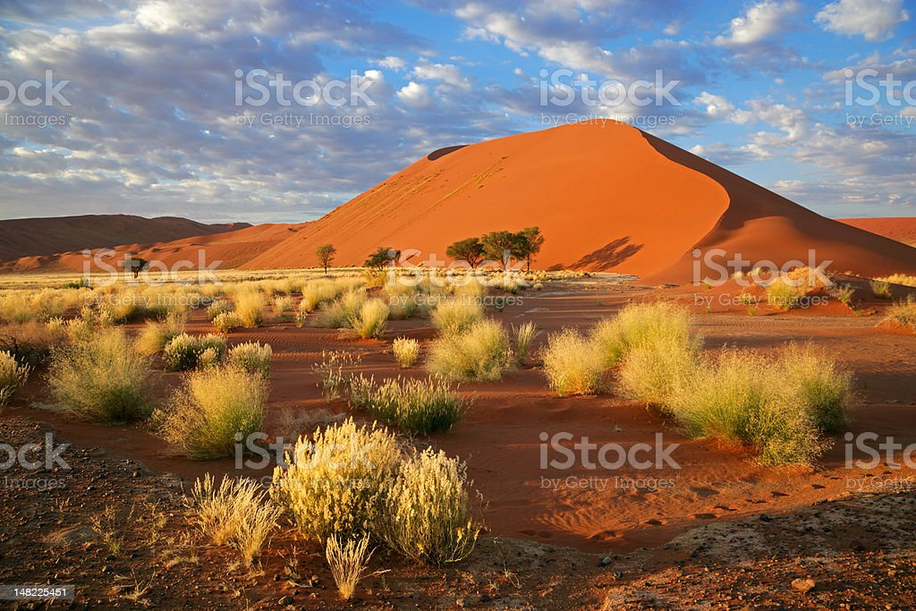 Grass, dune and sky royalty-free stock photo