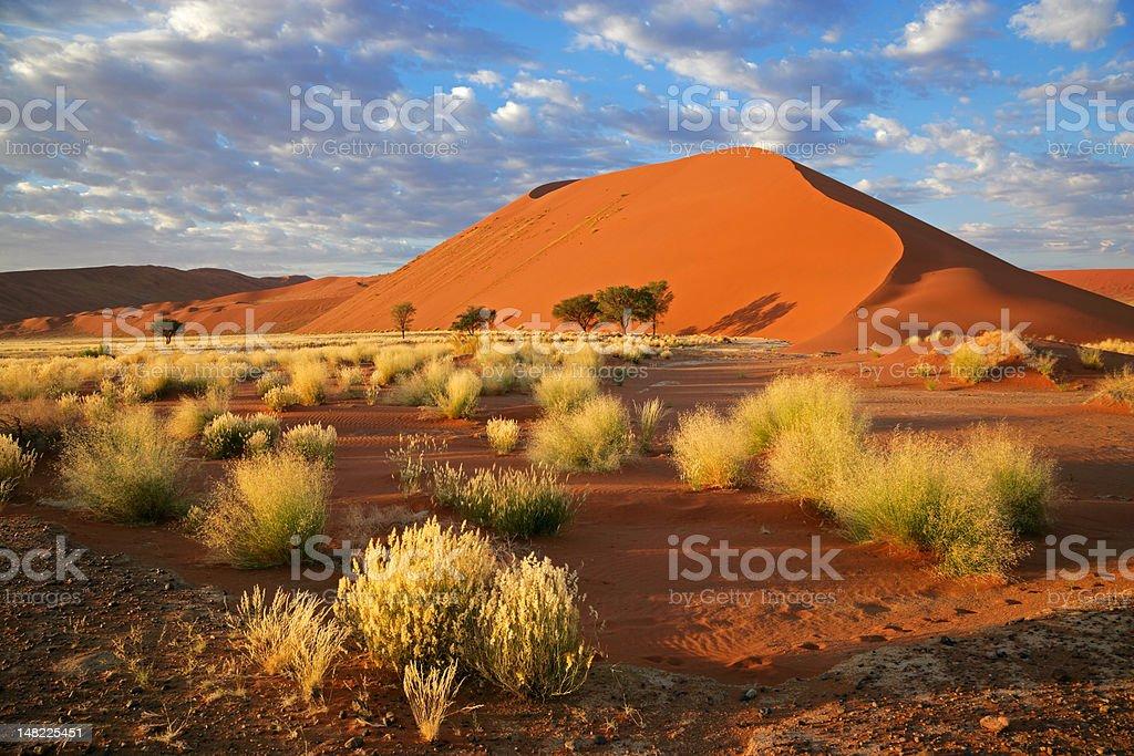 Grass, dune and sky stock photo