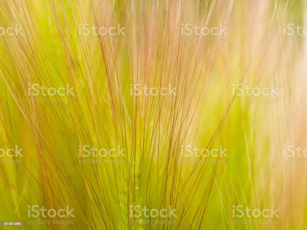 grass feather background stock photo