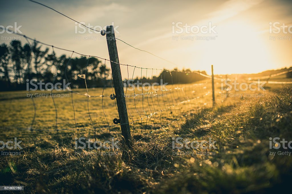 Grass field landscape in meadow during sunrise stock photo
