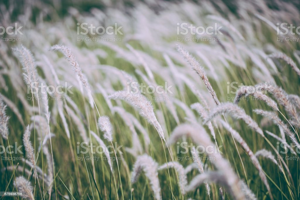 Grass field landscape in nature stock photo