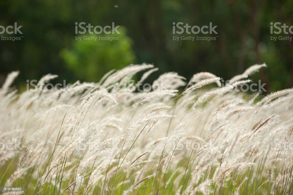 Grass field landscape stock photo