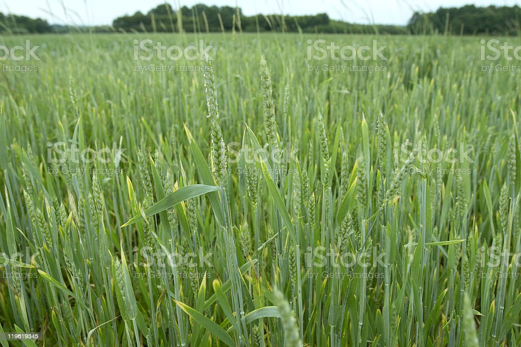 grass field nature stock photo
