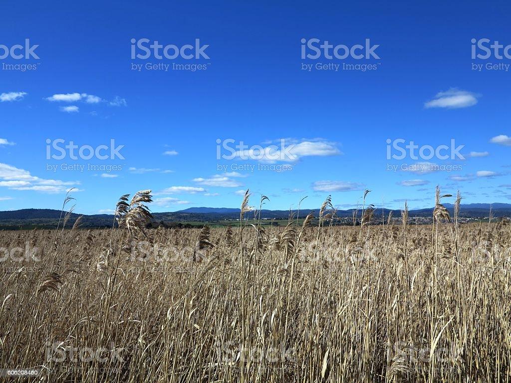 Grass field on Tamar Island stock photo