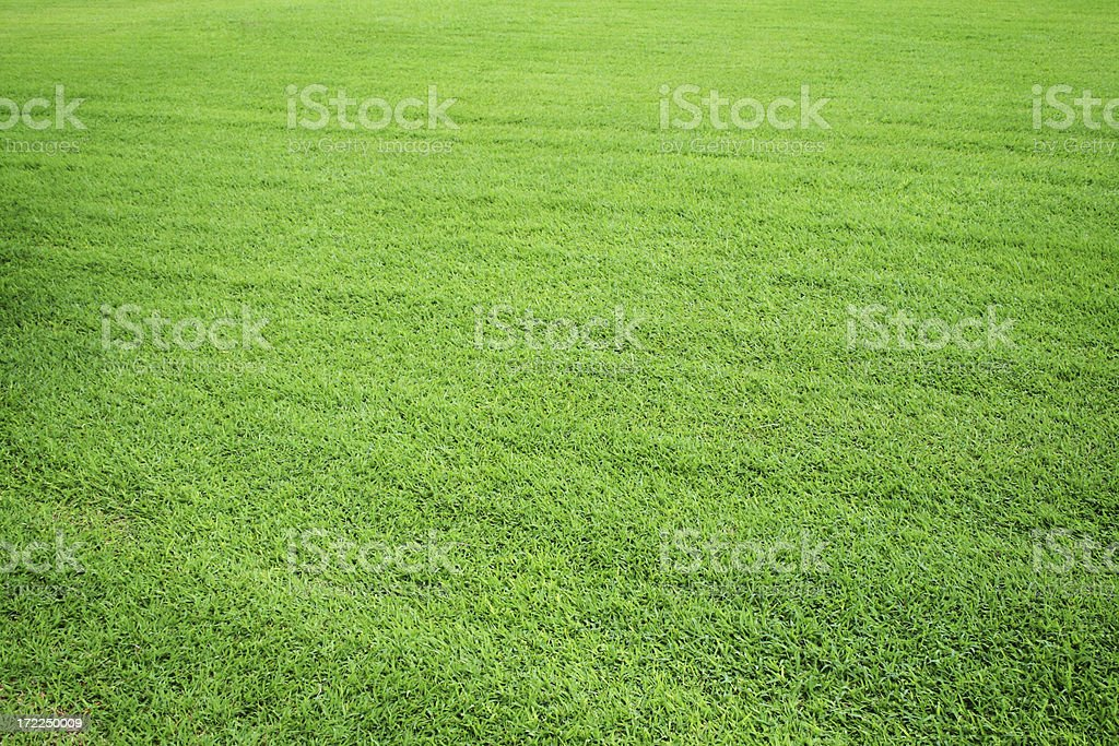 Grass Field royalty-free stock photo