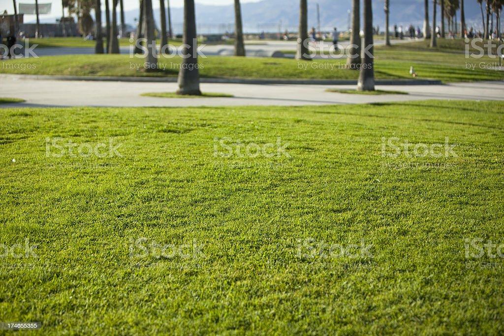 Grass Field royalty-free stock photo