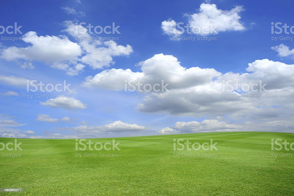 Grass field stock photo