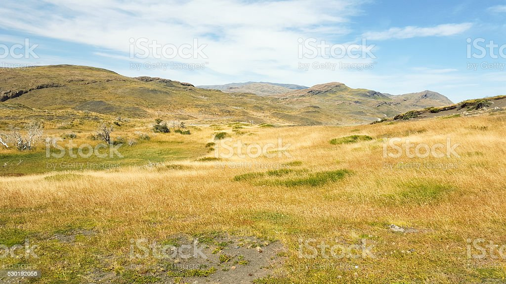 Grass field, Torres del Paine National Park stock photo