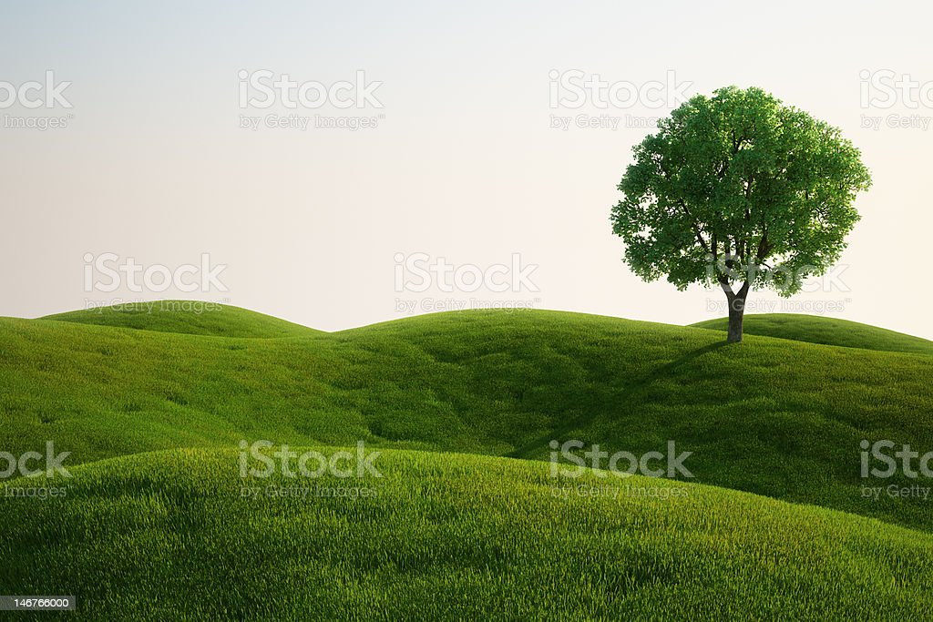 Grass field with a tree stock photo