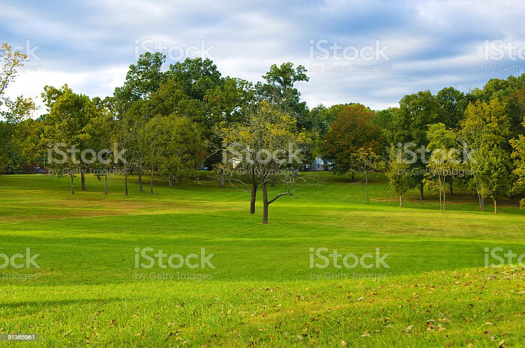 Grass Field with Trees at Park during Spring and Summer stock photo