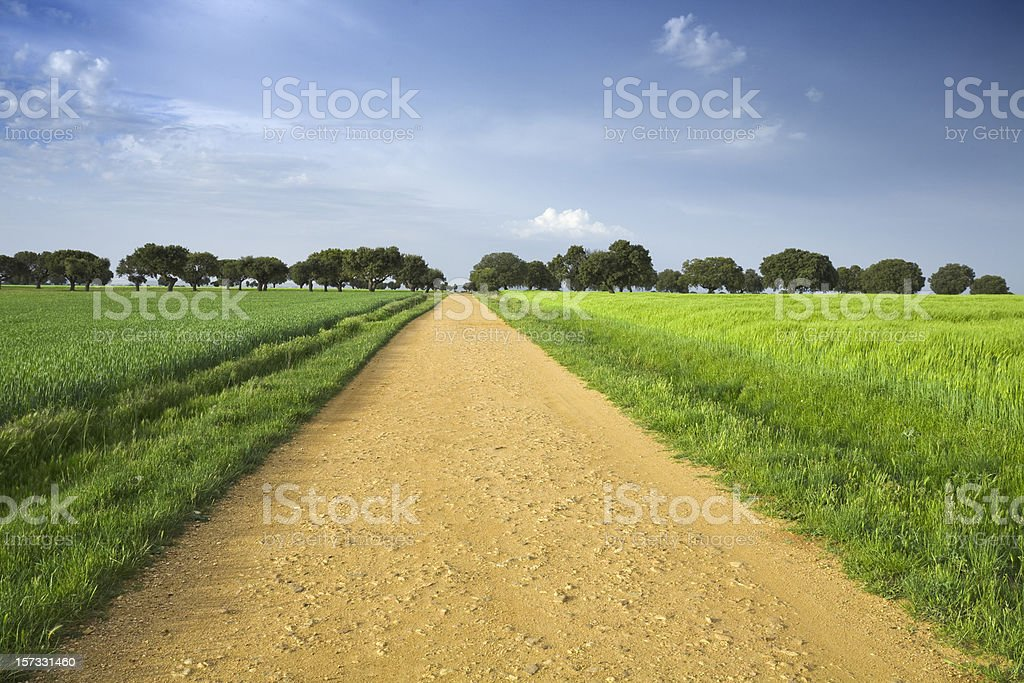 Grass fields on both sides of dirt load leading to forest royalty-free stock photo