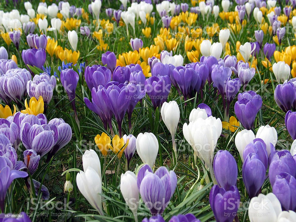 Grass filled with purple, white, and yellow flowers stock photo