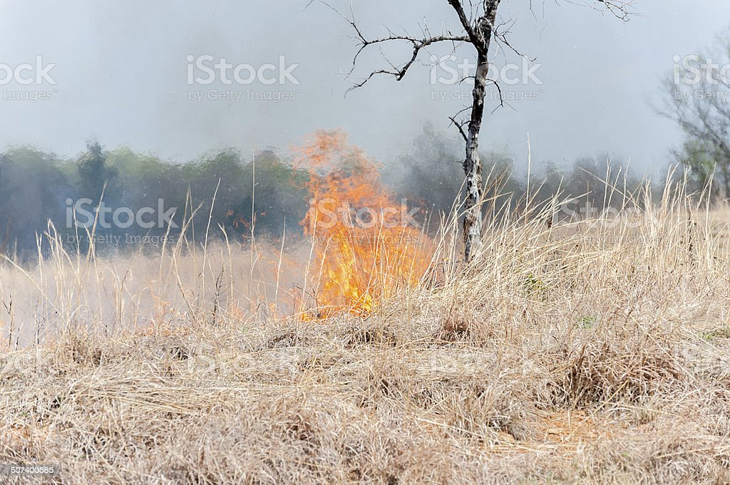 Grass Fire on the Open Prairie stock photo