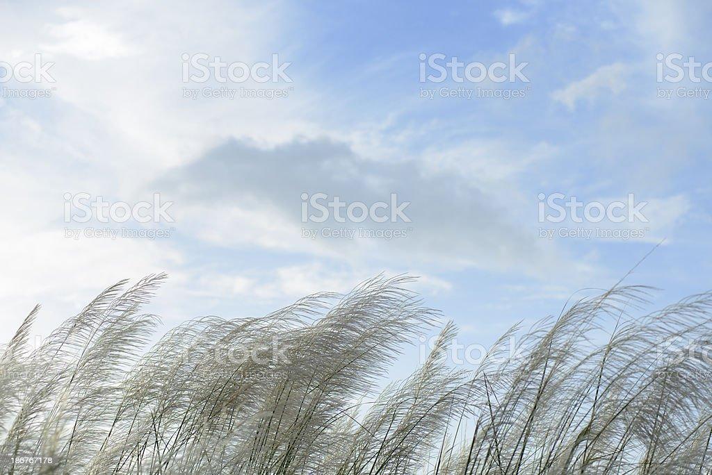 Grass flower  against cloudy sky , stock photo