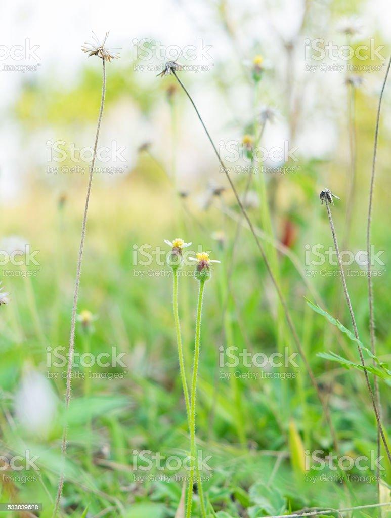 grass flower shoot fields soft tone stock photo