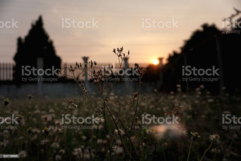 Grass flower sunset royalty-free stock photo
