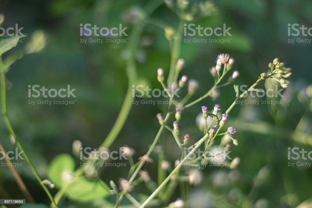 Grass flowers I stock photo