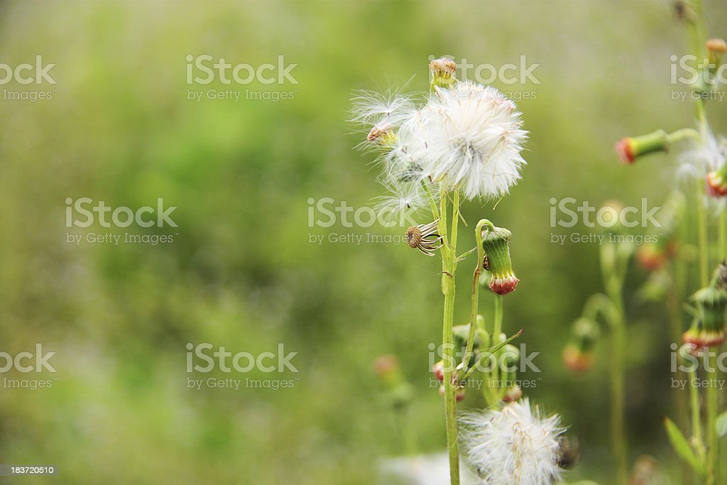 Grass flowers in a Green Spring Meadow royalty-free stock photo