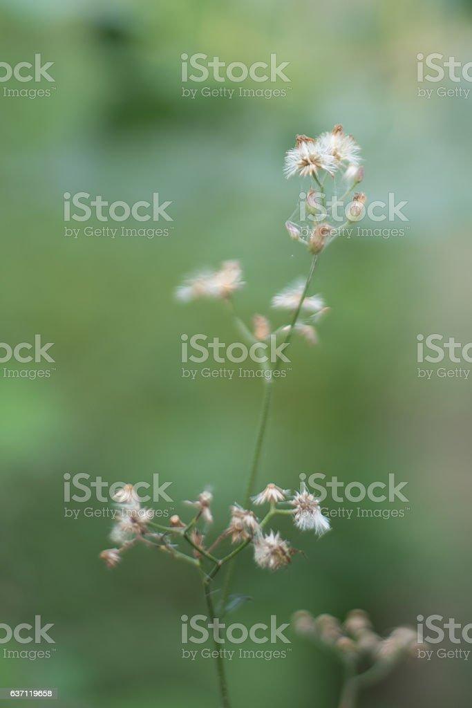 Grass flowers IV stock photo