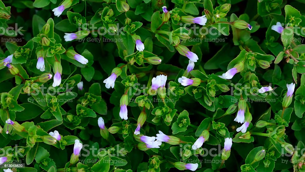 grass flowers texture background stock photo