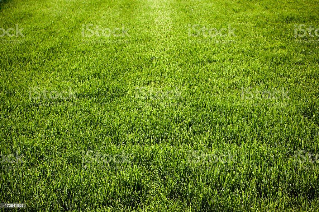 Grass - Freshly sown (XXXL) stock photo