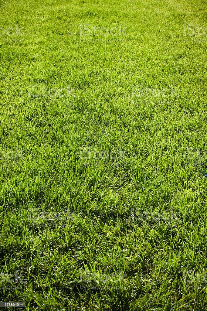 Grass - Freshly sown (XXXL) royalty-free stock photo