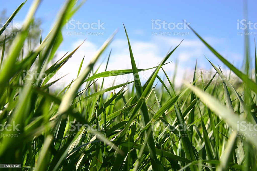 Grass from a bugs view royalty-free stock photo