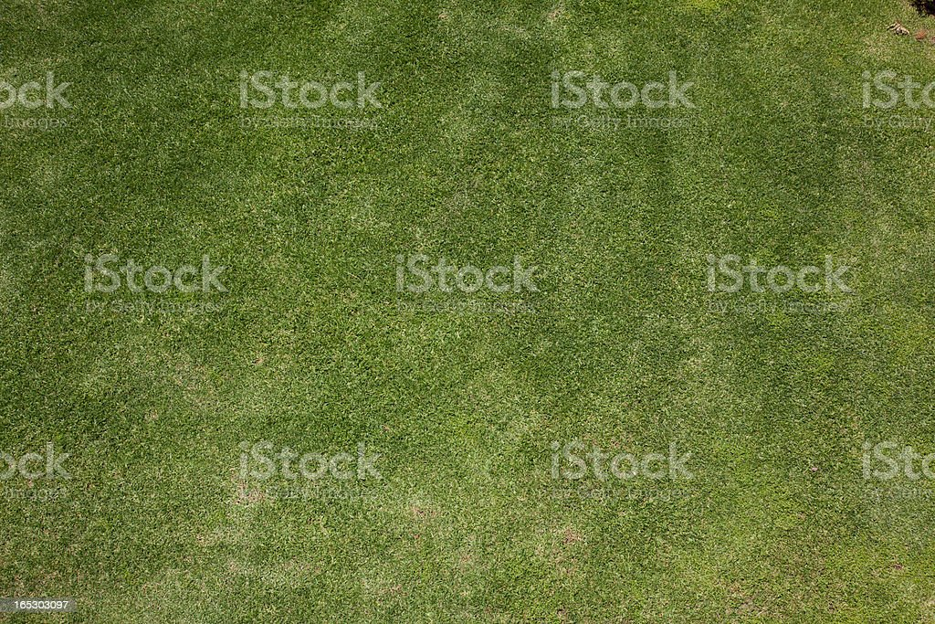 Grass, full frame royalty-free stock photo