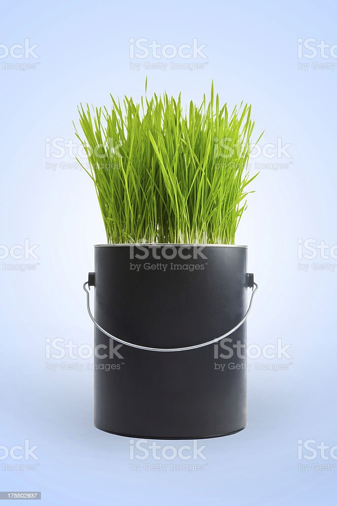 Grass growing in a black plastic paint can royalty-free stock photo