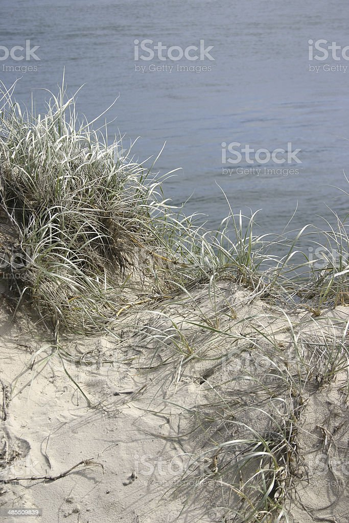 Grass Growing in the Sand-dune at the Beach stock photo