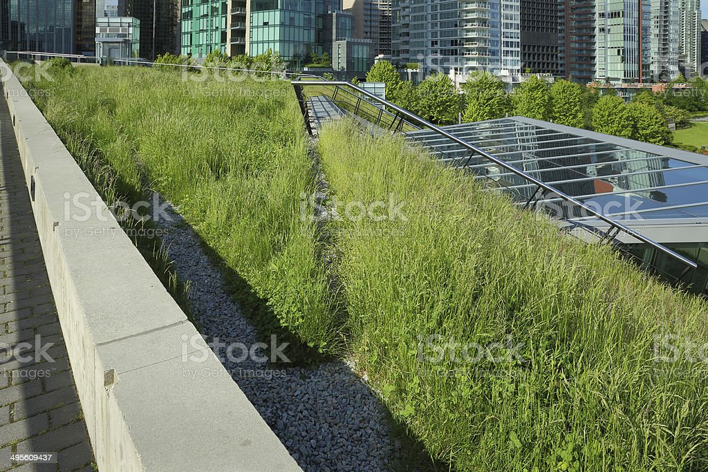 Grass Growing on a Green Roof stock photo