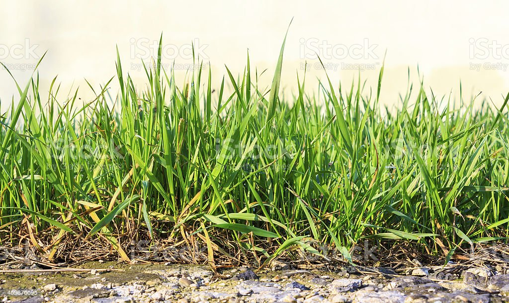 grass growing out of stone stock photo