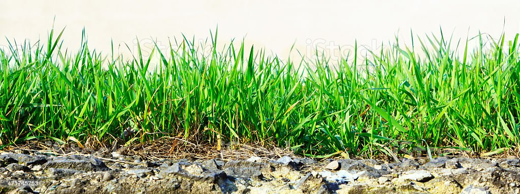 grass growing out of stone royalty-free stock photo