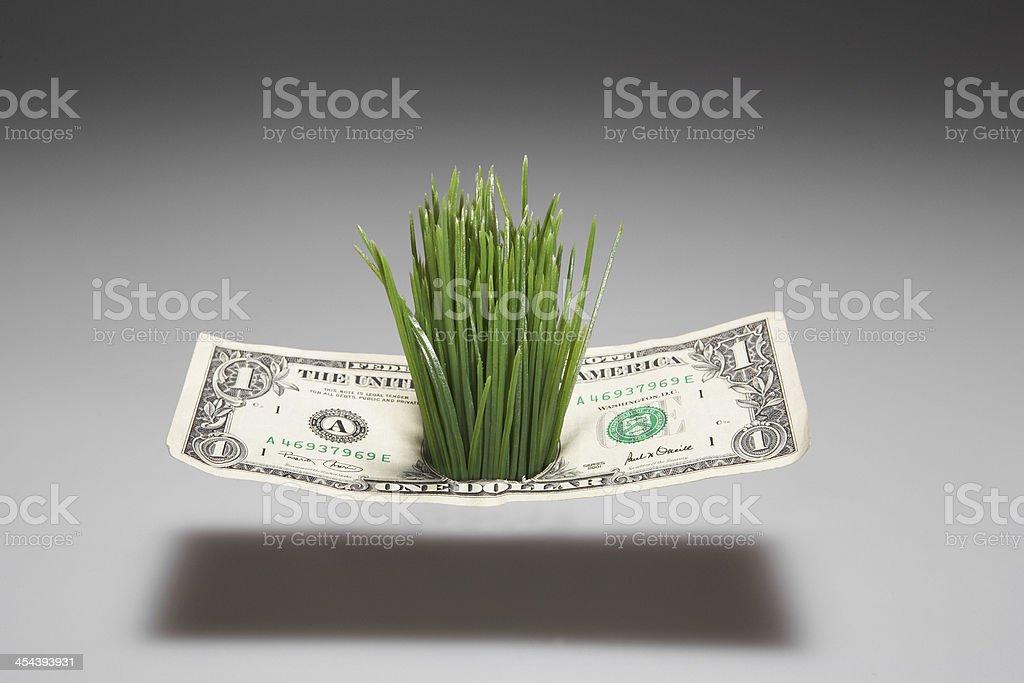 Grass Growing Through One Dollar Bill stock photo