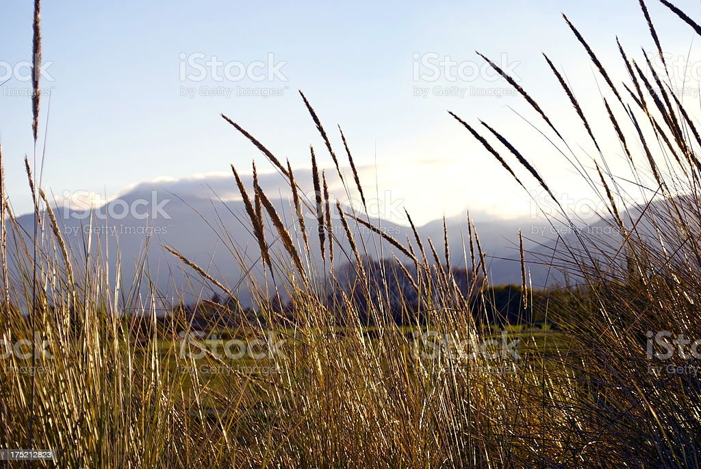 'Grass Heads, Motueka Spit, Tasman, NZ' royalty-free stock photo