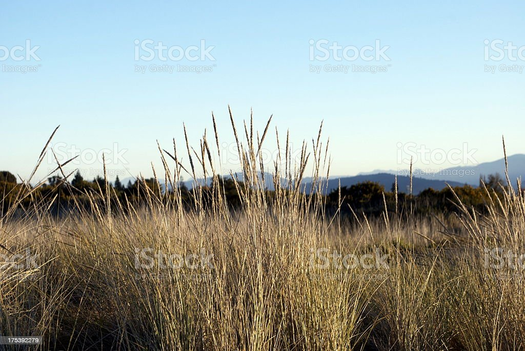 'Grass Heads, Motueka Spit, Tasman, NZ' stock photo