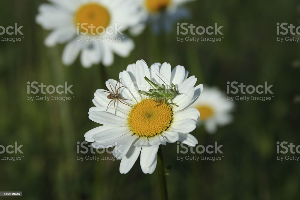 grass hopper flower royalty-free stock photo