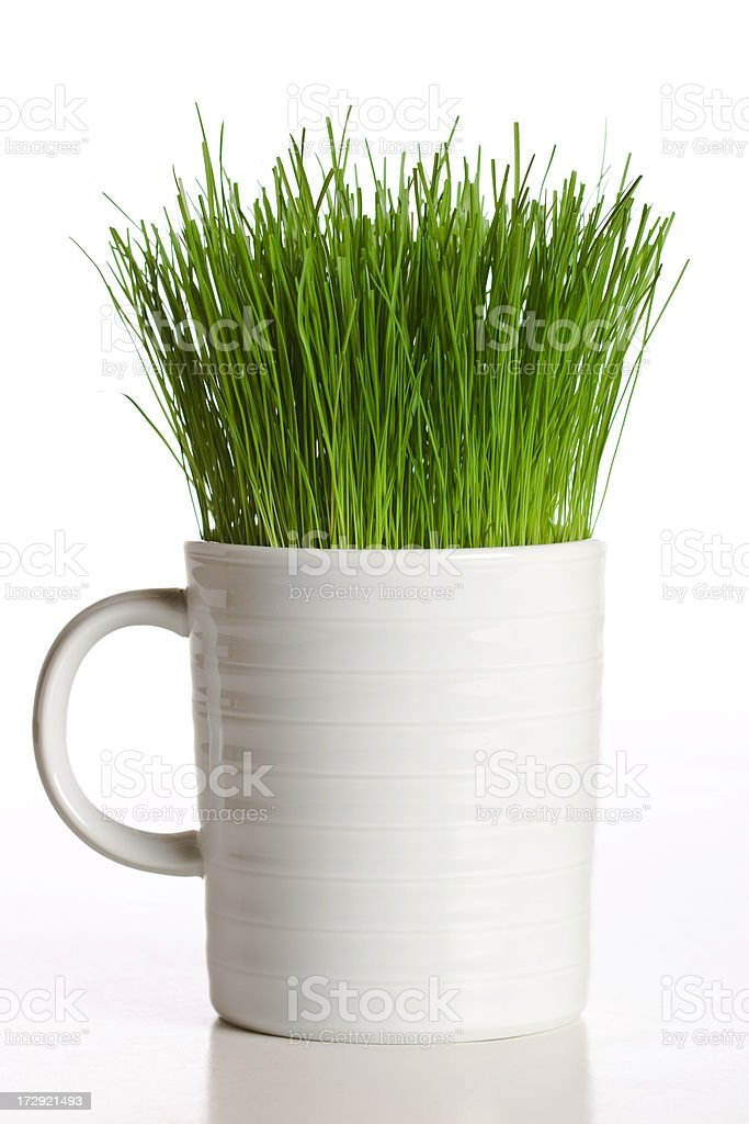 Grass In a Cup royalty-free stock photo