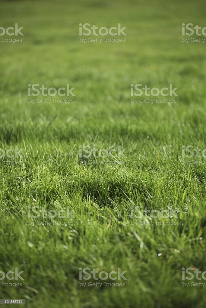 草のフィールド ロイヤリティフリーストックフォト