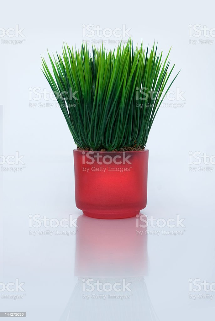 Grass in a red glass royalty-free stock photo