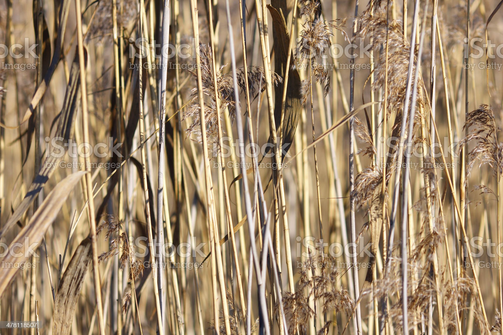 Grass in Autumn as a texture royalty-free stock photo