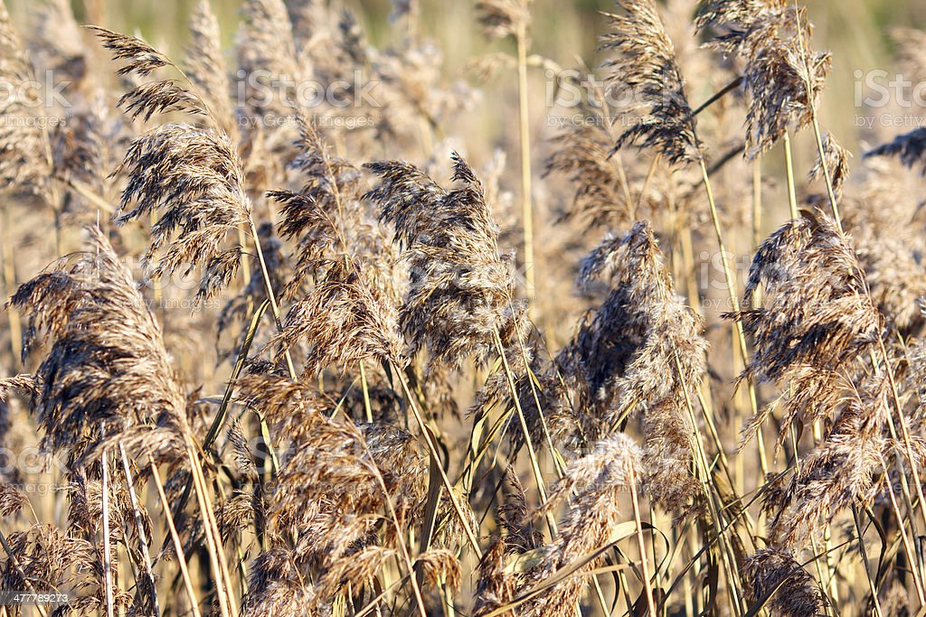 Grass in Autumn royalty-free stock photo