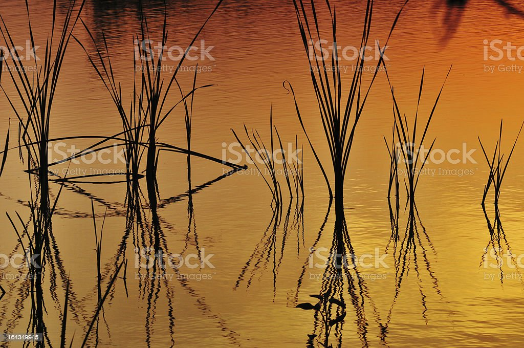 Grass in Lake royalty-free stock photo