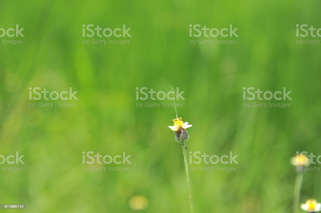 grass in selective point focus stock photo