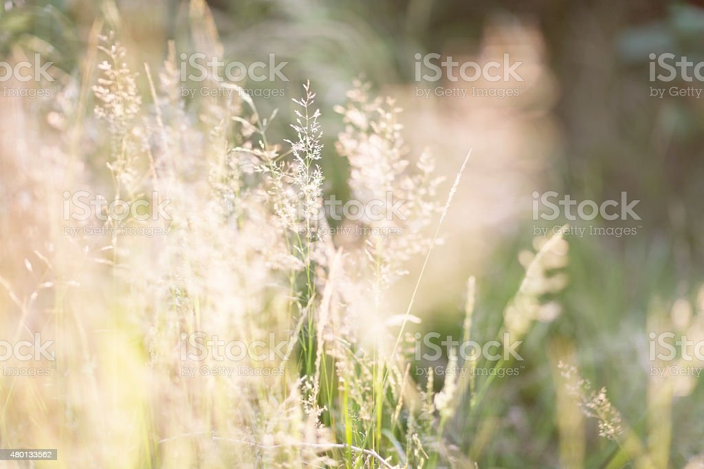 grass in summer stock photo
