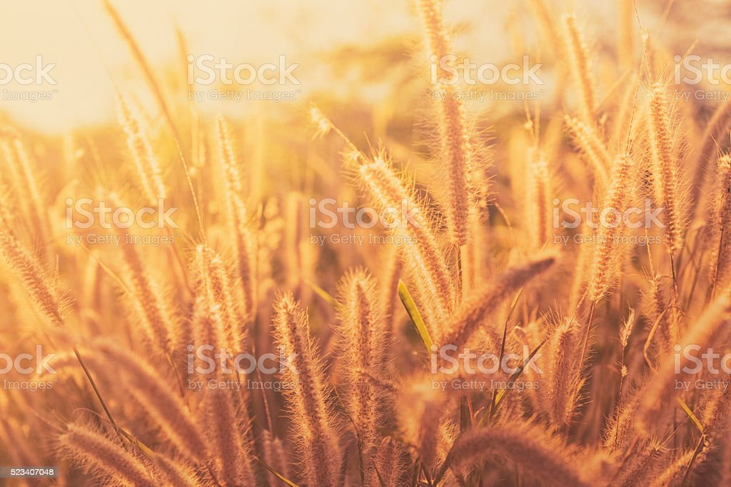Grass in summer sunlight stock photo